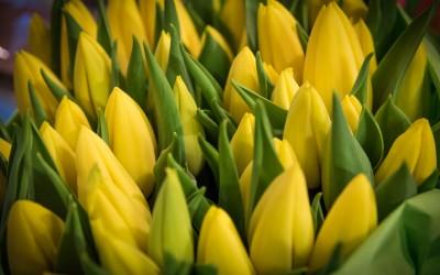 Der Frühling kommt ….